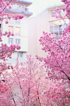 Looks like pink cherry blossoms