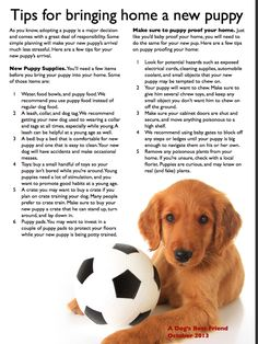 Tips for bringing home a new puppy. A dog's best friend