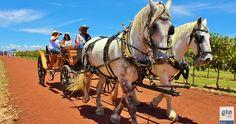 viajaBonito: Viñedo Cuna de Tierra toda una tradición de Guanajuato