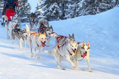 3-5nt Lapland, Flights & Breakfast with Optional Husky Sled Ride