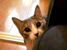 "cats are creepers sometimes. This video is called ""Stalking cat"""