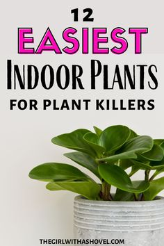 Not all plants are easy. But all of these houseplants are! Check out this list of hard to kill houseplants that are low-maintenance and will be easy to keep alive! #houseplantchallenge How to Care for Indoor Plants | Easy Indoor Plants | Easy Houseplants | Low Maintenance Houseplants |