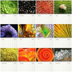 The twelve images inside my Texturology Calendar for 2016 that I chose especially for YOU the natural texture connoisseur!  Buy now on my website before December 15th!  #calendar #aeonium #mussels #cactus #cacti #algae #octopus #tentacle #seaweed #kelp #pitcherplant #palm #leaf #leaves #moss #kalanchoe #succulent #succulents #shell #spiral #ice #water #elements #plants #animals #nature #texture #textures #texturology