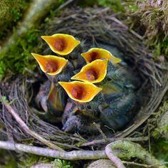love finding baby birds in their nest!