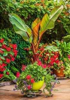 Multi-plant pot inspiration