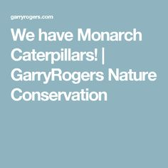 We have Monarch Caterpillars! | GarryRogers Nature Conservation