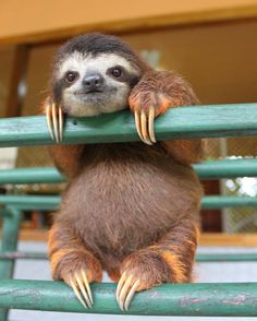 Baby sloth at the sloth sanctuary in Costa Rica