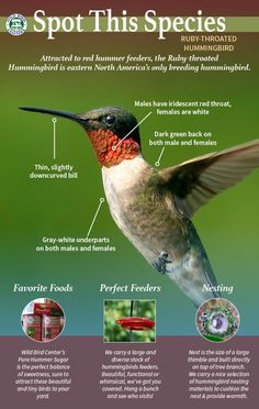Learn more about the Ruby-Throated Hummingbird - favorite foods, fun facts and nesting!