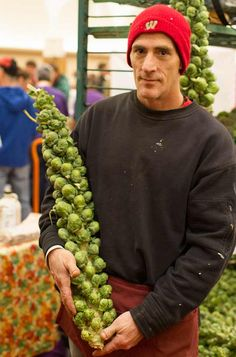 Madison Wisconsin - indoor farmer's market - Brussels Sprouts on the stalk from Knapp's Fresh Vegies. --Photo by Bill Lubing