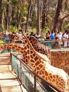 Visit Haller Park in Mombasa Kenya Mombasa Kenya, Nairobi, Holiday Destinations, Travel Destinations, Cheap Holiday, Travel Money, Long Haul, City Break, Tropical Paradise