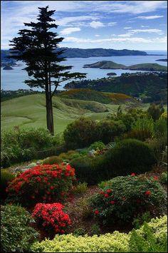 Otago Harbour Otago Peninsula, South Island, NZ   HoHo Pics