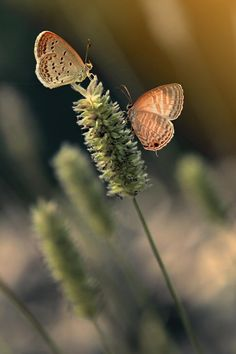In The Fields of Paper Flowers ❀ܓ : Photo Bokeh Photography, Peach And Green, Green Copper, Butterfly Kisses, World Of Color, Fauna, Beautiful Butterflies, Mother Nature, Color Mixing
