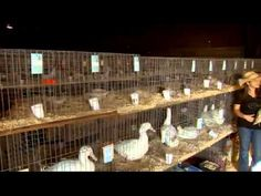 Poultry at the Arkansas State Fair - some familiar faces!!