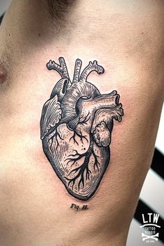 Amazing black and gray anatomical heart done at LTW Tattoo Studio in Barcelona.                                                                                                                                                     More