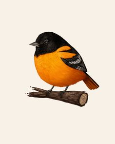 Oriole Fat Bird by Mike Mitchell