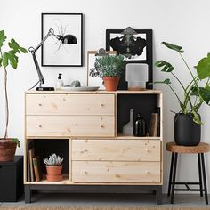 plants, wood, white and black
