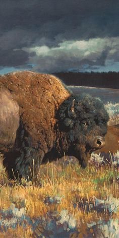 Restless Detail Art Prints By Nancy Glazier Artist - Restless Detail Art Prints By Nancy Glazier Artist This Is A Side View Of A Huge American Bison Getting Ready To Cross The Open Range To Find More Food Hes Huge And Probably Weighs A Ton The Wildlife Paintings, Wildlife Art, Animal Paintings, Buffalo Animal, Buffalo Art, American Bison, Native American Art, Animal Bufalo, Wildlife Photography