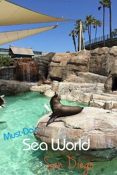 Must Do Experiences at Sea World San Diego highlights - seeing Shamu is slated for a change!  Here are Sea World tips for visiting this California amusement park, along with what not to miss.