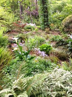 My #woodland #garden - K Blevons #BirminghamAl