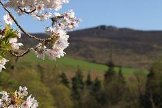 Imagen de blossom, beautiful, and flowers