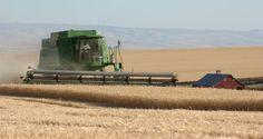 Wheat fields - Pendleton, Oregon
