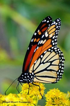 """5x7 Nature Inspired Photo Greeting Card or Print--A Note of Thanks--#119--""""Magnificent Monarch"""" Butterfly Photograph by AngelHeartTreasures on Etsy"""