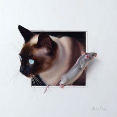 Thai-Siam Katze