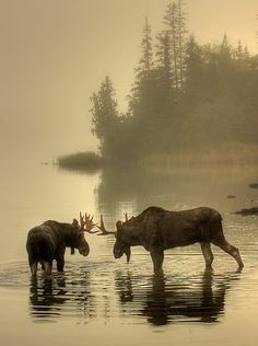 Share the Experience | Honorable Mention, Wildlife: Carl TerHaar, Isle Royale National Park