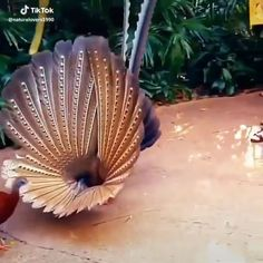 If he is trying to interest her romantically, I don'. Pretty Birds, Beautiful Birds, Animals Beautiful, Beautiful Moments, Exotic Birds, Colorful Birds, Cute Funny Animals, Cute Baby Animals, Funny Birds