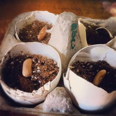 How to grow seedlings in an egg carton