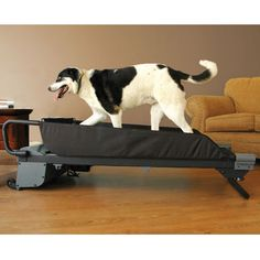 The Canine Treadmill - This is the treadmill that provides owners with a means to maintain consistent levels of exercise for their dogs, regardless of weather conditions. Its whisper-quiet motor drives a sturdy rubber belt that is soft on paws. Speed, distance, and incline can be adjusted using simple controls. Each model is equipped with a safety on/off switch.