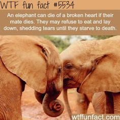 : Facts about elephants - WTF fun facts | March 27 2016 at 05:01AM | http://www.letstfact.com