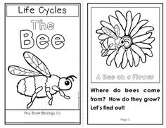 The Life Cycle of the Bee: Two student books and related activities that support close reading and comprehension. (Color and black-and-white) #lifecycles #bees $