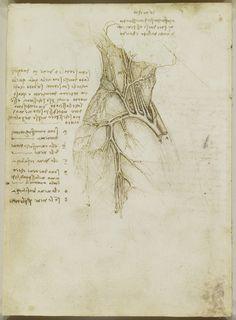 The vessels of the neck Leonardo da Vinci (Vinci 1452-Amboise 1519) #TuscanyAgriturismoGiratola