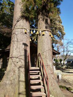 """""""Hie-JInja""""(Sacrario), Shuzenji-Onsen(Terme), Izu Shizuoka Japan (Febbraio)"""
