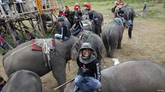 """Mahouts, or elephant drivers, rest with their animals between matches at the King's Cup Elephant Polo Tournament in Hua Hin, south of Bangkok."" - BBC news, 6 September, 2011"