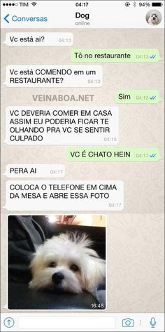 21 Conversas mostrando o que seu cachorro diria se tivesse WhatsApp