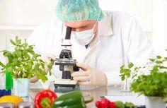 Food-Technology.jpg (419×272)
