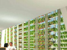 Conceptual: Indoor Hydroponic Farming