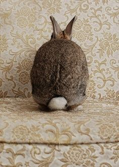 ⓕurry & ⓕeathery ⓕriends - photos of birds, pets & wild animals - shy bunny Funny Bunnies, Cute Bunny, Bunny Rabbit, Bunny Tail, Rabbit Tale, Rabbit Food, Mundo Animal, Cute Baby Animals, Hare