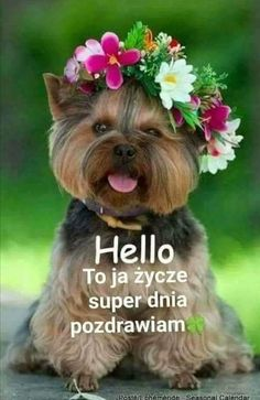 Happy Birthday Wishes Images, Good Morning, Humor, Smiley, Good Night, Good Night Funny, Polish, Pictures, Buen Dia