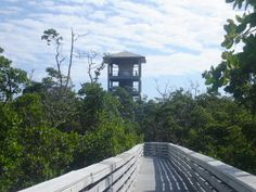 TripAdvisor/carlbarry What could be a better way to relax than a day of sightseeing, paddling hiking, and fishing in this 1,500-acre coastal mangrove? This is a wonderful way to experience Florida's natural beauty. 9. Barefoot Beach Preserve, Bonita Springs  TripAdvisor/OHcampers This spectacular beach near Naples has been named one of Florida's best beaches many times, yet it somehow remains relatively unknown and unspoiled. 10. Kraft Azalea Gardens, Winter Park…
