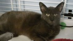 Mason #6428 Hi! My name is Mason! I'm a Cats Exclusive kitty. I was found in a Walmart parking lot on the corner of 441. I am so sweet and friendly, someone dumped me and just took off and left. I am a very good boy and I am very calm. I love to sit in your lap and just purr. I have been tested, fixed, de-flead, de-wormed, and am up to date with all my shots.