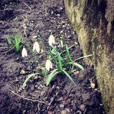 Tavasz *-*