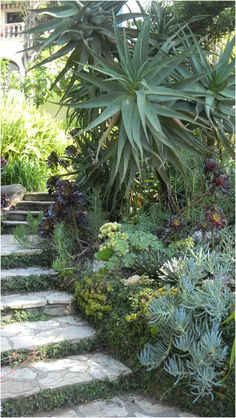 Always love succulents stairs. Makes you feel your going underwater. Succulent garden, Los Angeles