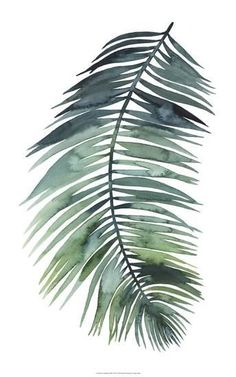 Palm Tree Leaves, Tropical Leaves, Palm Trees, Watercolor Leaves, Watercolor Art, Plant Painting, Plant Art, Palm Fronds, Plant Illustration