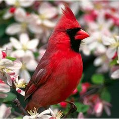 Cardinal..our beautiful state bird