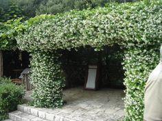9 of the Best Plants for Trellises and Archways - Page 10