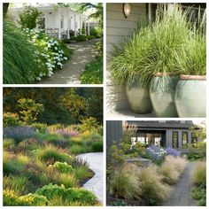 Landscaping with Ornamental Grasses Beautiful ideas for landscaping with ornamental grasses used as an informal grass hedge, mass planted in the garden, or mixed with other shrubs and plants. Short Ornamental Grasses, Ornamental Grass Landscape, Landscape Grasses, Tall Grasses, Landscaping Plants, Front Yard Landscaping, Landscaping Ideas, Landscaping Software, Luxury Landscaping
