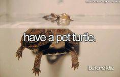 Have a pet turtle